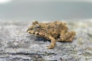 amphibiens vivant en asie photo