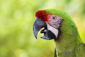 perroquet ara photo