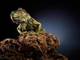 dragon effrayant. photo