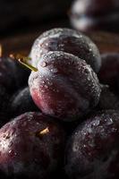 prunes violettes mûres bio photo