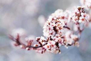 printemps photo