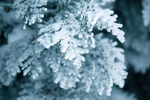 branche d'hiver photo