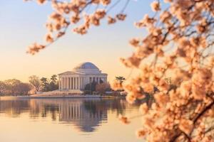 le mémorial de jefferson pendant le festival des cerisiers en fleurs photo