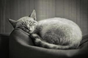 chaton endormi photo