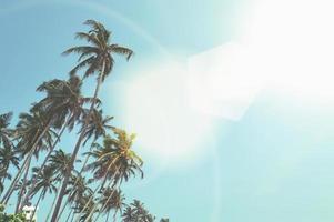 palmier photo