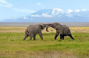 l'éléphant photo