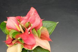 Flamant rose en culture thaïlandaise, fond noir photo