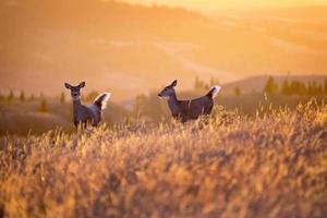 collines de cyprès coucher de soleil cerf photo