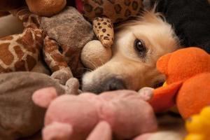chien entre jouets pour animaux de compagnie
