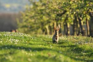 lapin de Pâques photo