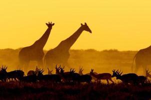 Scène du coucher du soleil dans le parc national d'Etosha, Namibie photo