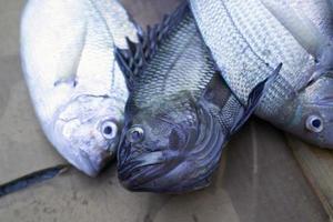 des poissons photo