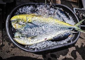 poisson tropical photo