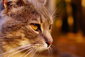 chat de visage photo