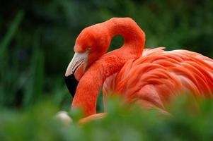 flamingo ii photo
