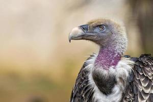 vautour isolé, buse, griffon, regarder, vous