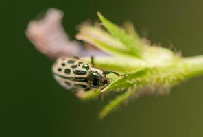 insecte coléoptère photo