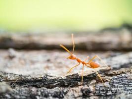 fourmi dans le petit monde photo
