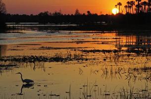 beau lever de soleil à orlando wetlends park dans le centre de la floride photo