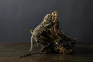 série dragon barbu