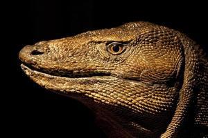 Dragon de Komodo photo