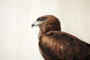 Aigle en or photo