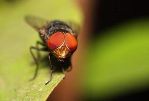 insecte mouche photo