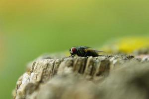 mouche au repos photo