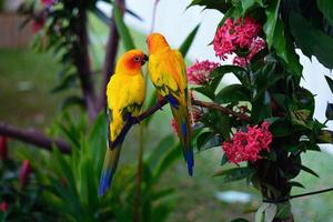 image de perroquets
