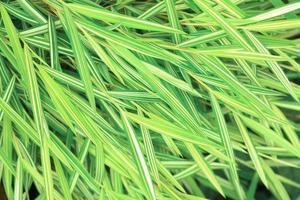 arbre de bambou photo