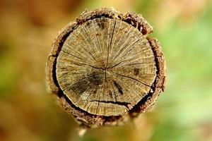 arbre coupé photo