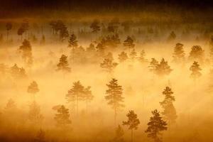 paysage de marais brumeux