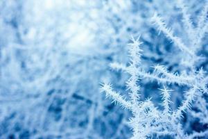 branches d'arbres enneigés, hiver photo