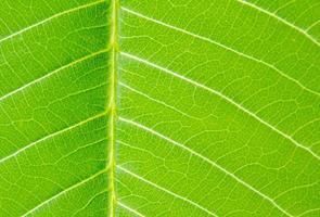 la feuille verte sur la nature photo