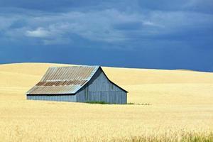 grange bleue dans un champ doré avec un ciel bleu