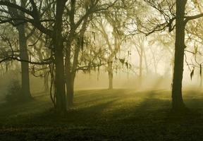 rayons de soleil parmi les chênes photo