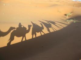 silhouettes de chameaux dans le désert du sahara