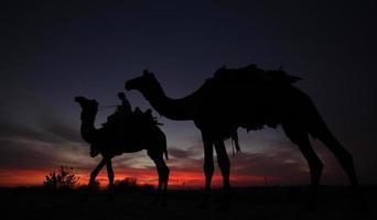 chameaux coucher de soleil photo