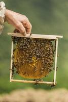 apiculteur photo