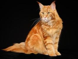 chat de race photo