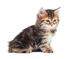 petit chaton photo