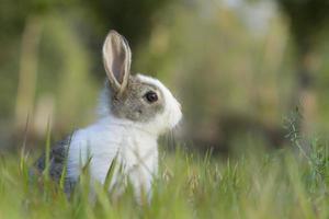 bébé lapin dans l'herbe