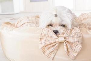 chien sur le lit de chien photo