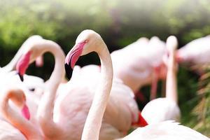 oiseau flamant rose photo