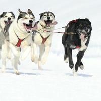 chiens sportifs photo