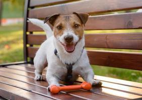 chien mignon souriant avec os photo