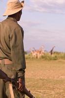 garde du parc monte la garde pendant le safari. photo