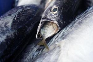 gros poissons mangent de petits poissons photo