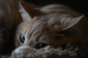 yeux de chat regardant photo