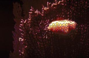 escargot flamant photo